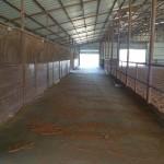 Main Barn Stalls & Breezeway