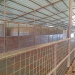 Main Barn Stalls